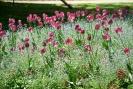 Jardin du Luxembourg_11